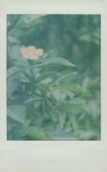 IMG_1526.rose.edited